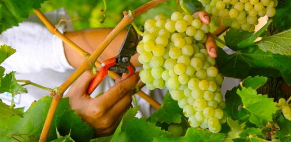 r_ruta_vino_penedes_o